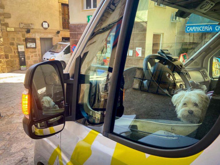 documentacion viajar con perro